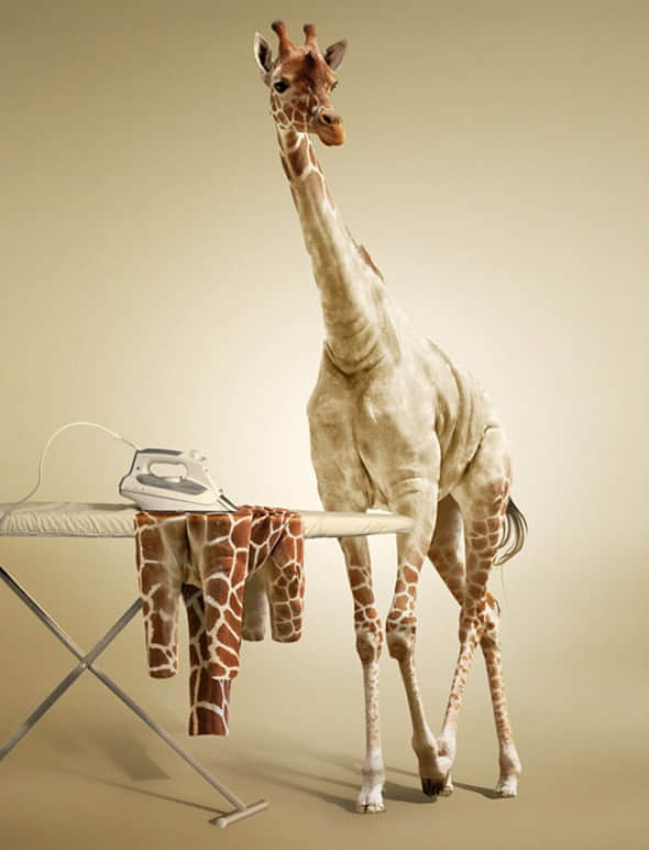 Undress-a-Giraffe-in-Photoshop--e1296134864666