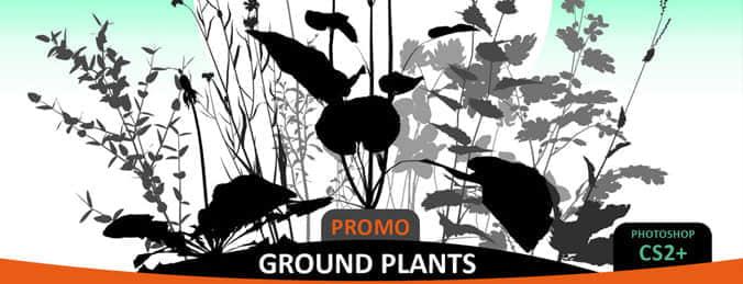 Ground-Plants-brushes