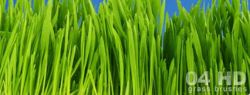 grass-hd-brushes-large-e1298465483817