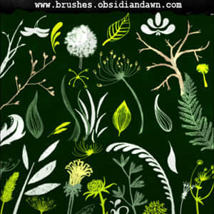 素描式植物茎叶笔刷