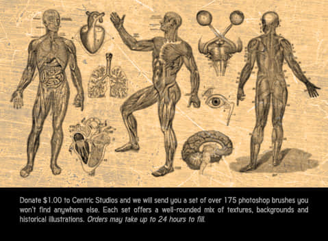 人体分解图笔刷
