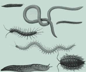 蚯蚓蜈蚣蛞蝓昆虫笔刷