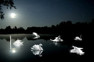 Swan_Lake_by_midnightstouch