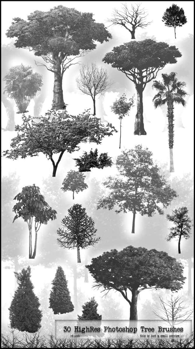 30种高分辨率树木笔刷