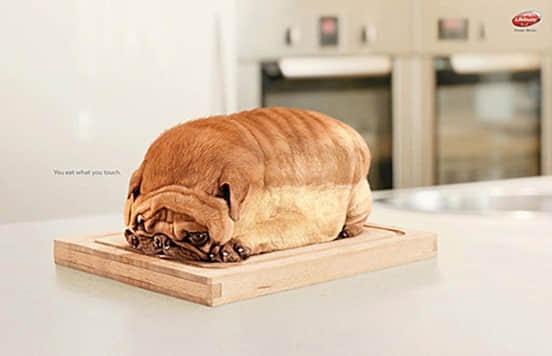 Dog-Toast