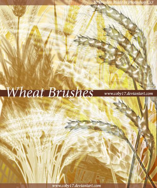 小麦稻穗笔刷下载