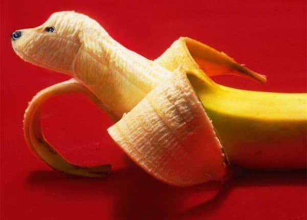0个有趣的创意水果动物造型