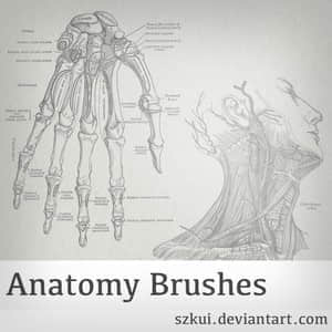 anatomy-brushes.normal
