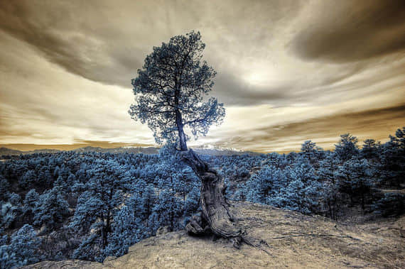Infrared-Photography-50