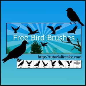 birds-brushes.normal