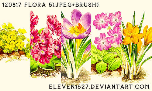 120817_flora5_by_eleven_by_eleven1627-d5biz5z