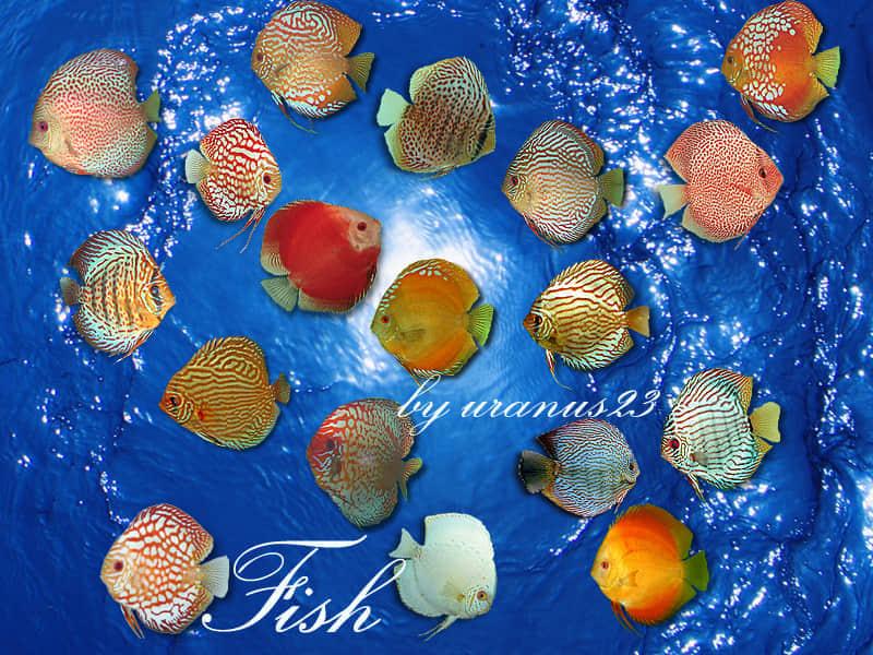 Fish_by_uranus23