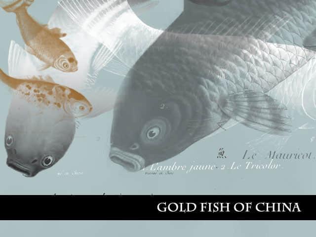 中国的金鱼笔刷
