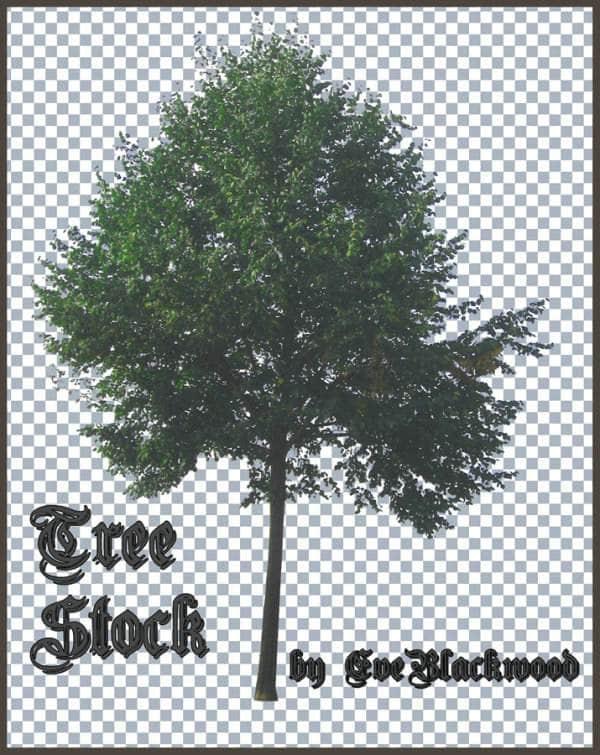 高分辨率树木ps笔刷素材下载 树木笔刷 大树笔刷 plants brushes