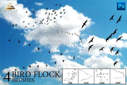 hjr_birds