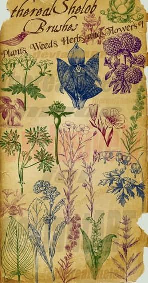 素描手绘植物花草树木笔刷素材 植物花纹笔刷  plants brushes