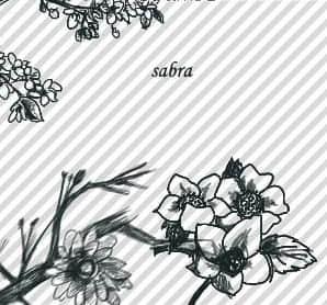 漂亮的中国风水墨桃花PS笔刷 桃花笔刷  flowers brushes plants brushes