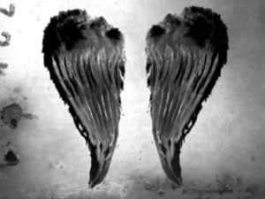 ps蝴蝶翅膀笔刷_蝴蝶翅膀、天使翅膀、蜻蜓翅膀等photoshop笔刷素材下载 : PS笔刷吧 ...