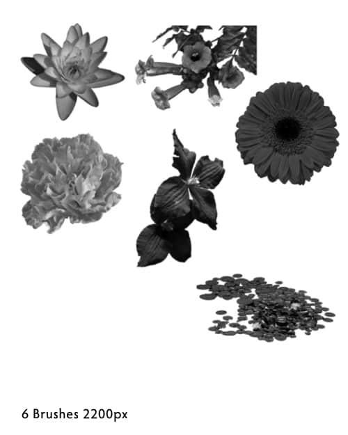 真实的鲜花花朵photoshop笔刷素材 #.3 鲜花笔刷 花朵笔刷  plants brushes