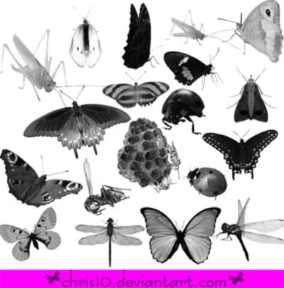 ps蝴蝶翅膀笔刷_蝴蝶昆虫photoshop笔刷素材下载 : PS笔刷吧-笔刷免费下载