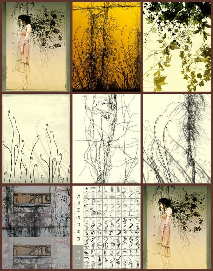 印象藤蔓植物素材Photoshop高品质笔刷 藤蔓笔刷  plants brushes