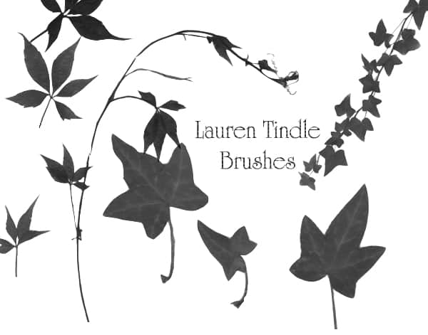 叶子、藤蔓Photoshop植物笔刷 藤蔓笔刷 叶子笔刷  plants brushes
