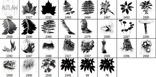 真实的树叶、绿叶Photoshop高清笔刷 绿叶i表示 树叶笔刷 叶子笔刷  plants brushes