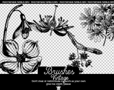 彼岸花效果花纹图案PS笔刷 彼岸花笔刷  flowers brushes