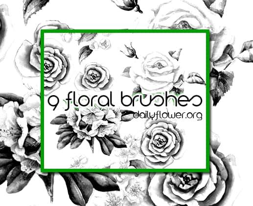 9中鲜艳的手绘玫瑰花图案PS笔刷 玫瑰花笔刷  flowers brushes