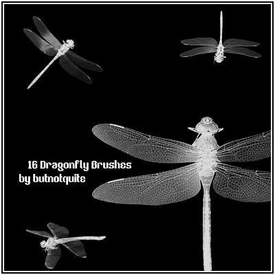真实的蜻蜓Photoshop笔刷素材 蜻蜓笔刷  insects brushes