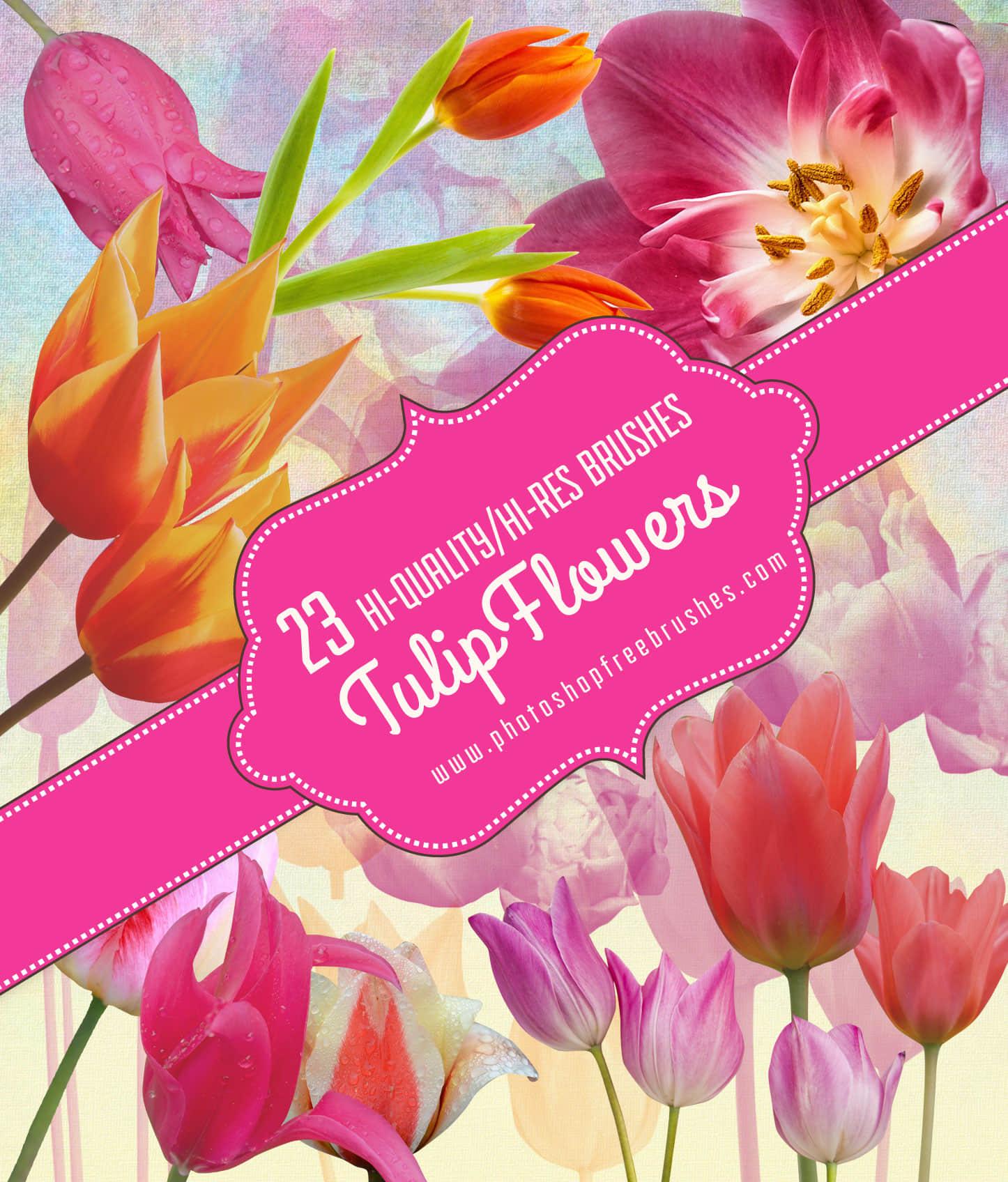 23种真实的郁金香花朵、鲜花Photoshop笔刷素材 鲜花笔刷 郁金香笔刷 花朵笔刷  plants brushes