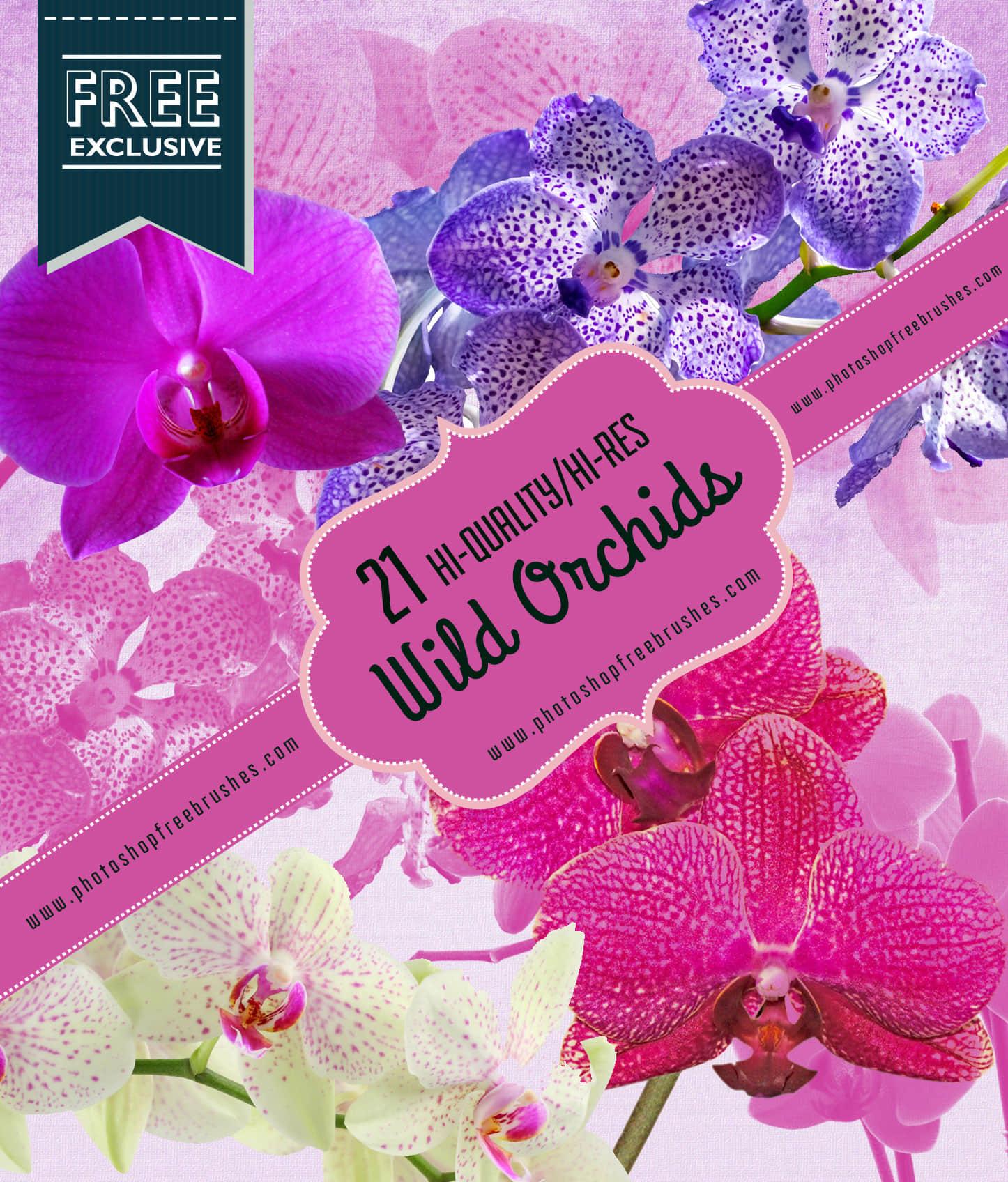 21种漂亮的兰花真实花朵Photoshop鲜花笔刷 鲜花笔刷 兰花笔刷  plants brushes