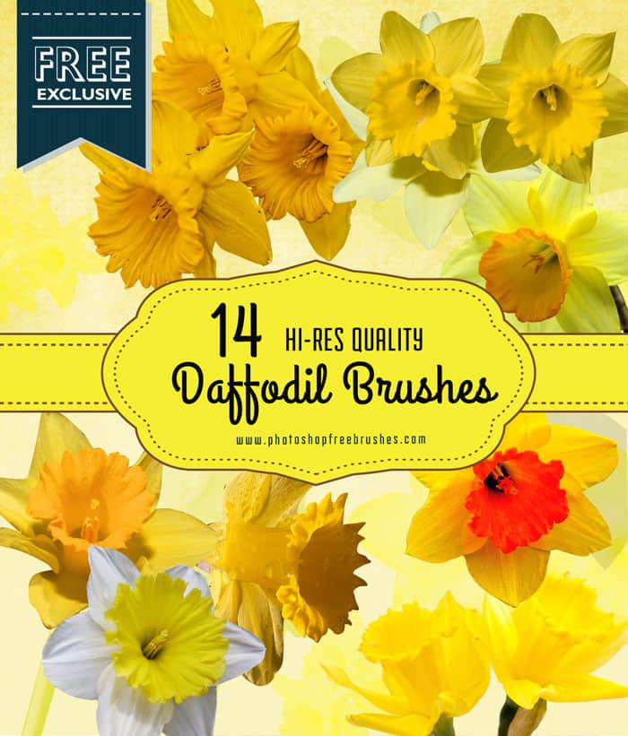 14种漂亮的水仙花Photoshop花朵笔刷下载 鲜花笔刷 花朵笔刷  plants brushes