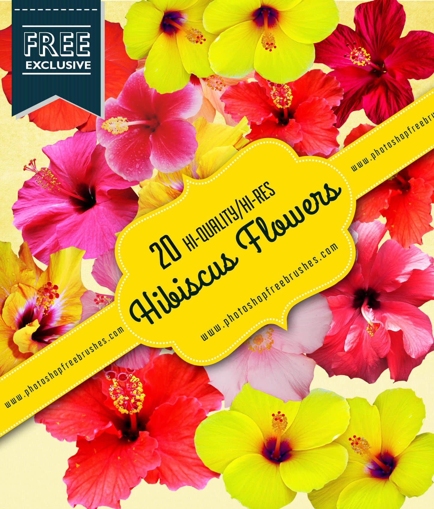 20种高清真实的芙蓉花PS鲜花笔刷 鲜花笔刷 花朵笔刷 真实花朵笔刷  plants brushes