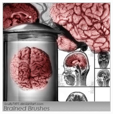 真实的大脑皮层Photoshop笔刷素材 大脑笔刷  characters brushes