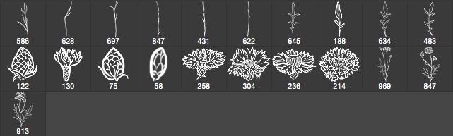 手绘矢车菊花纹图案PS笔刷下载 花朵笔刷 矢车菊笔刷 手绘鲜花笔刷  flowers brushes plants brushes
