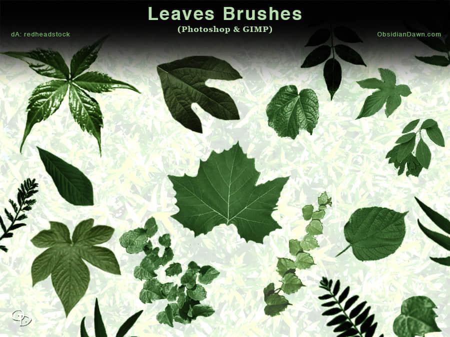 各种绿叶PS笔刷素材下载 野草笔刷 蕨类植物笔刷 绿叶笔刷 树叶笔刷  plants brushes