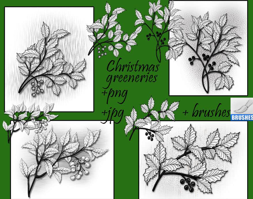 漂亮的手绘圣诞节枝叶、圣诞节饰品装饰PS笔刷下载 圣诞节笔刷  adornment brushes plants brushes