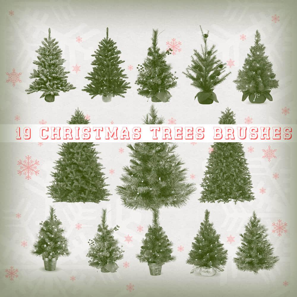 19个真实的圣诞节圣诞树造型PS笔刷下载 圣诞节笔刷 圣诞树笔刷  plants brushes
