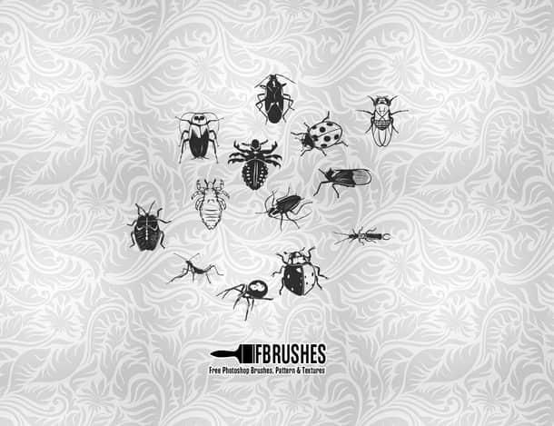 瓢虫、臭虫、蜘蛛Photoshop昆虫笔刷下载 蜘蛛笔刷 臭虫笔刷 瓢虫笔刷  insects brushes