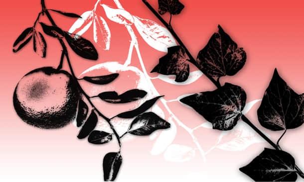 植物树枝版刻图案Photoshop笔刷下载 版刻笔刷  plants brushes
