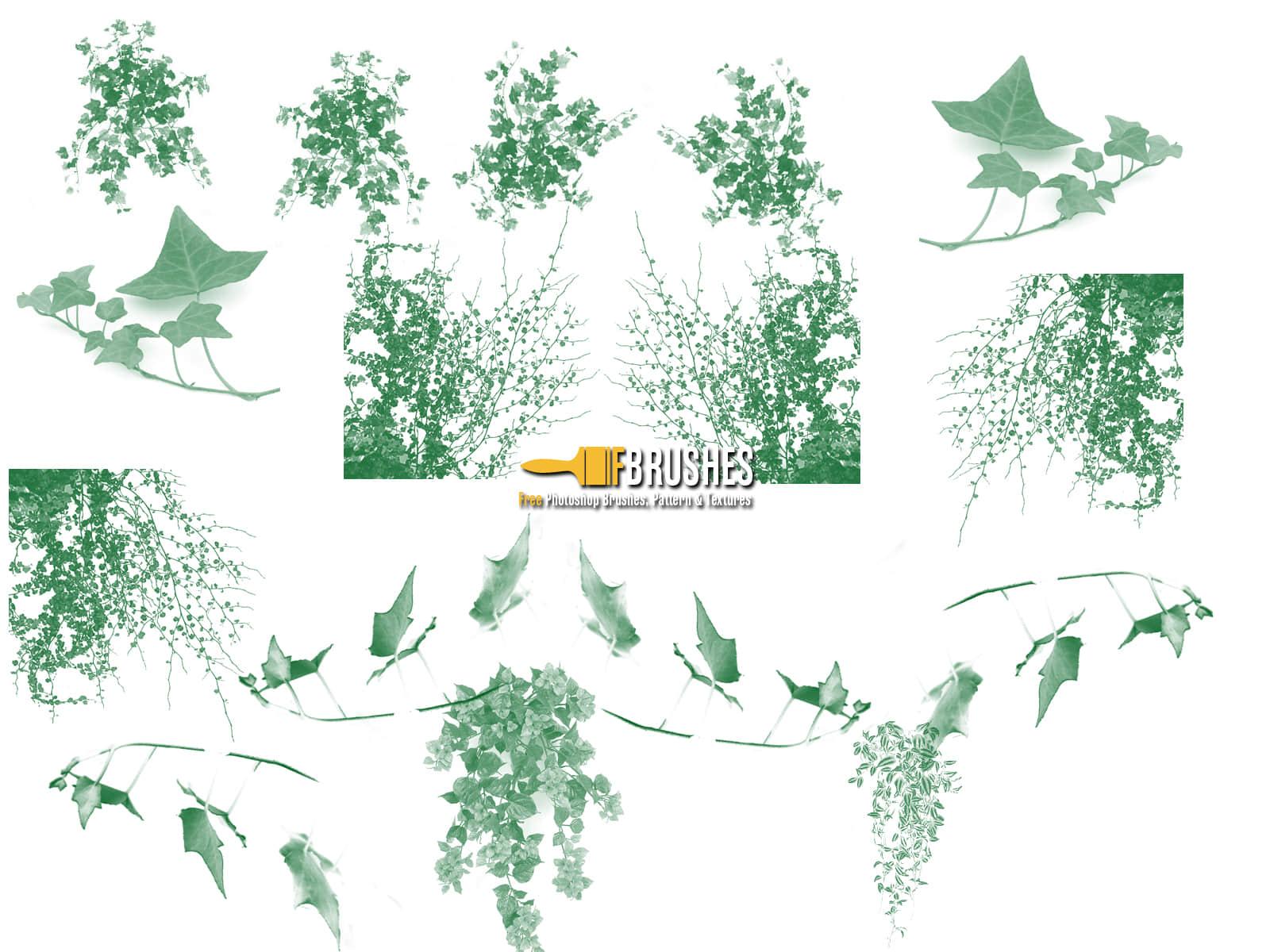 常青藤植物叶子、藤蔓PS笔刷下载 藤蔓笔刷 常青藤笔刷 叶子笔刷  plants brushes