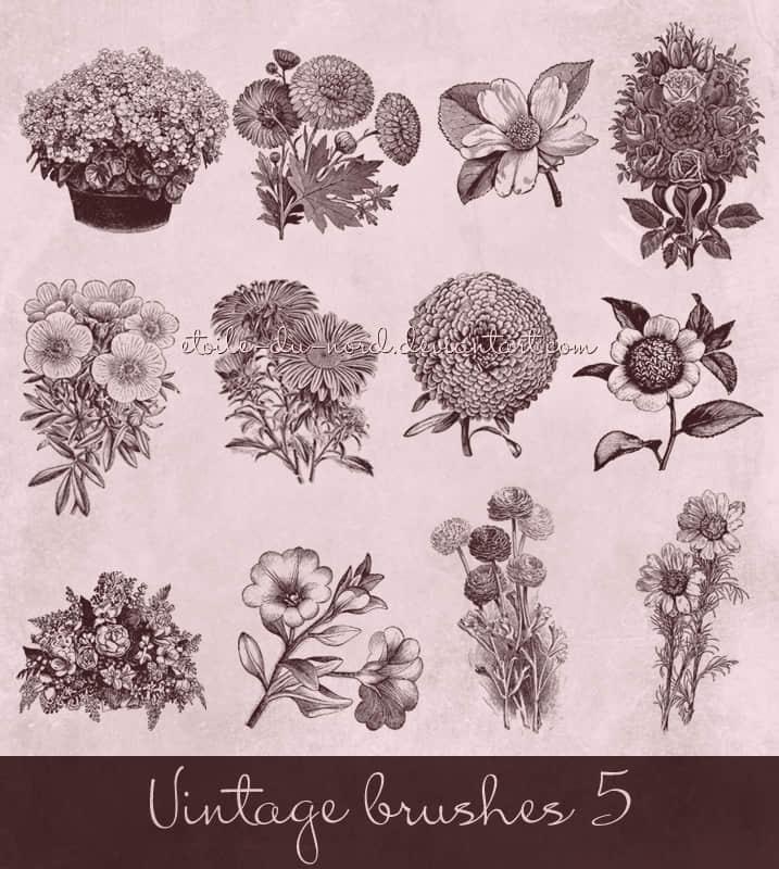 复古式手绘鲜花、花朵Photoshop笔刷下载 鲜花笔刷 花朵笔刷 手绘花纹笔刷  plants brushes