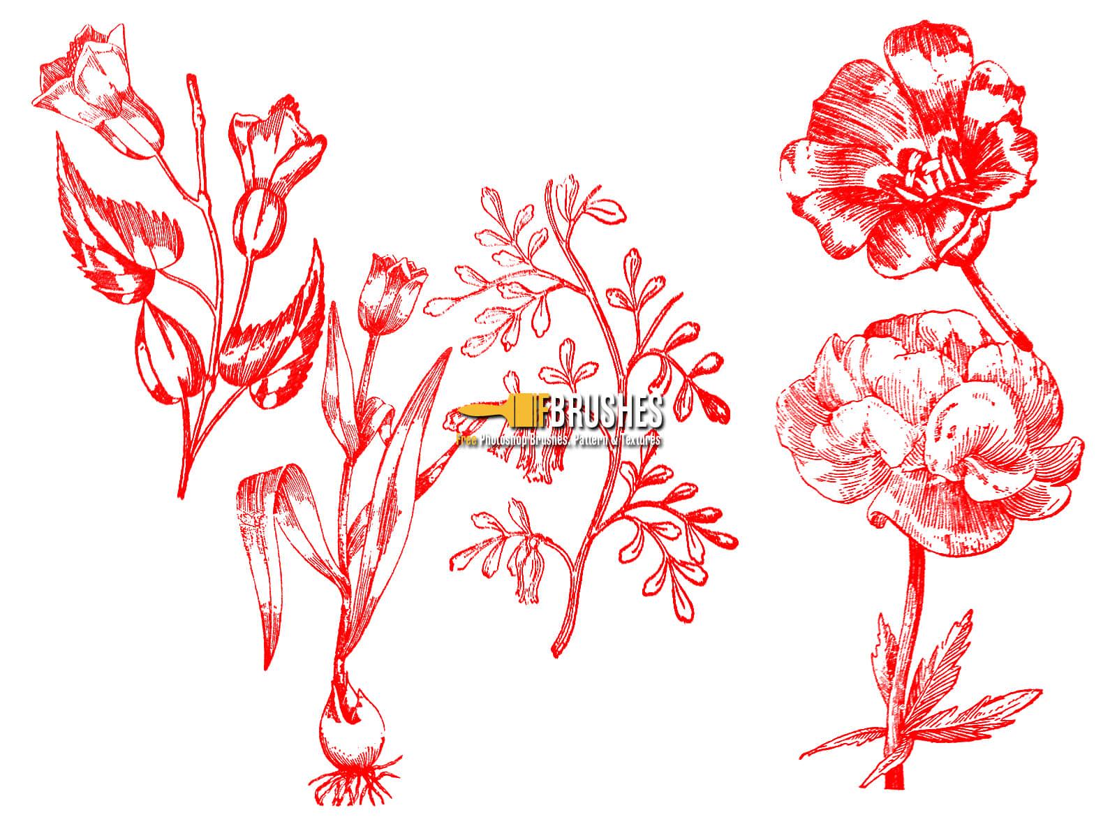 复古式植物鲜花图案、版刻花纹PS笔刷下载 花纹笔刷 版刻笔刷 植物花纹笔刷  flowers brushes