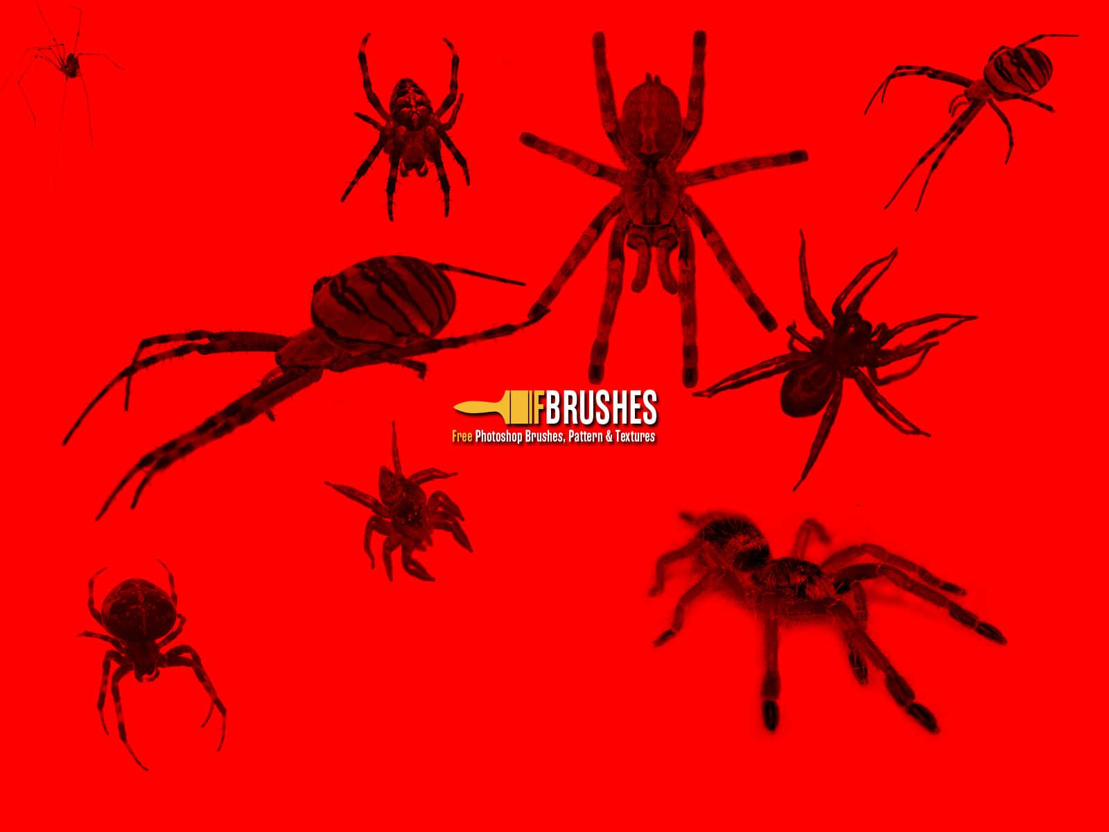 真实恐怖蜘蛛、狼蛛、黑寡妇蜘蛛Photoshop笔刷下载 蜘蛛笔刷 毒蜘蛛笔刷  insects brushes