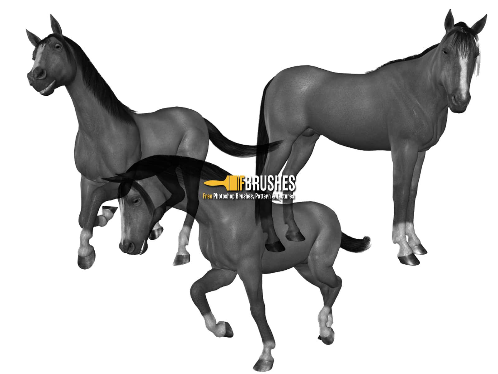 骏马、马匹PS笔刷素材 骏马笔刷 马笔刷 马匹笔刷  %e5%8a%a8%e7%89%a9%e7%ac%94%e5%88%b7