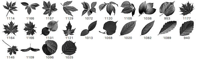 24种免费的树叶叶子、枫叶、梧桐叶PS笔刷素材下载 梧桐叶笔刷 树叶笔刷 枫叶笔刷 叶子笔刷  plants brushes