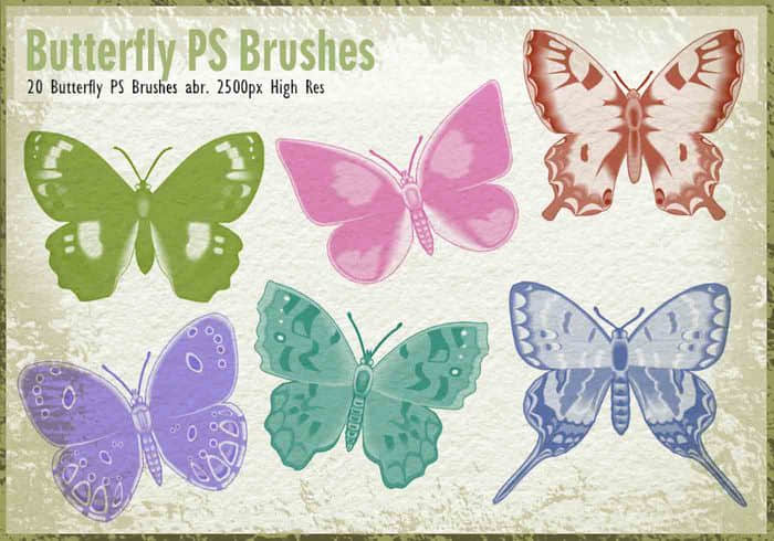 20种漂亮蝴蝶图形PS昆虫笔刷 蝴蝶笔刷  insects brushes