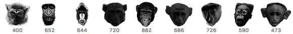 大猩猩头部、狒狒头、猴子头颅PS笔刷下载  %e5%8a%a8%e7%89%a9%e7%ac%94%e5%88%b7