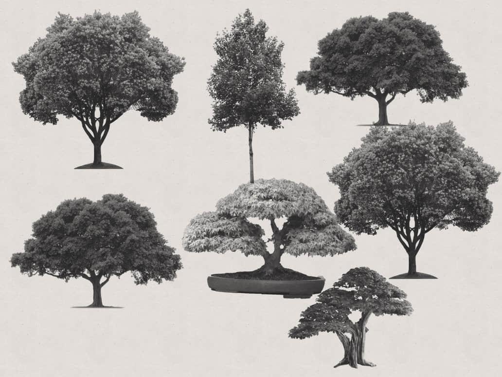 大树、树木、盆栽盆景抠像Photoshop笔刷素材 树木笔刷 大树笔刷  plants brushes